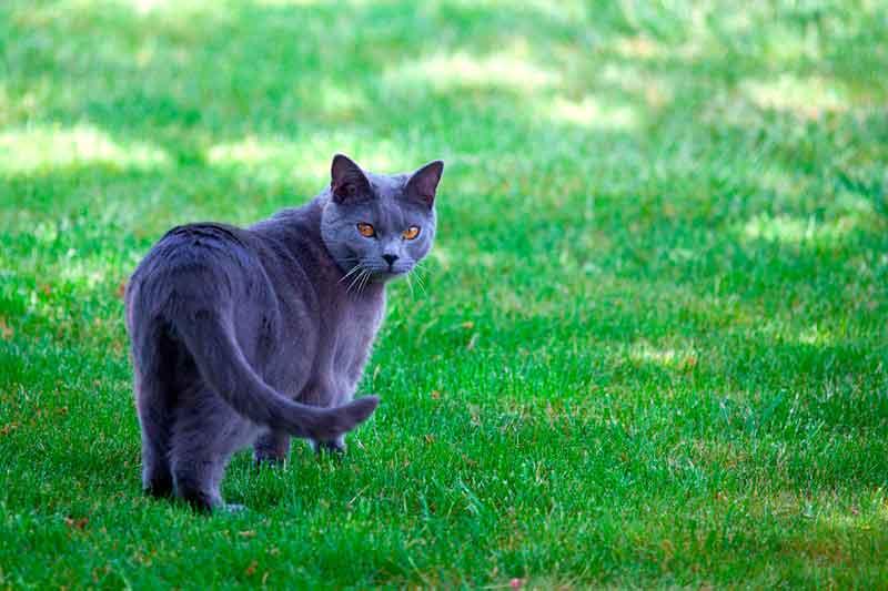 Faut-il laisser sortir son chat en extérieur ?
