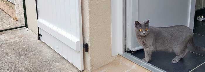 Sortir en extérieur avec un enclos pour chat