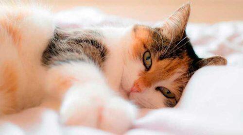 Ronnronnement chez le chat : tout ce que vous ne savez pas