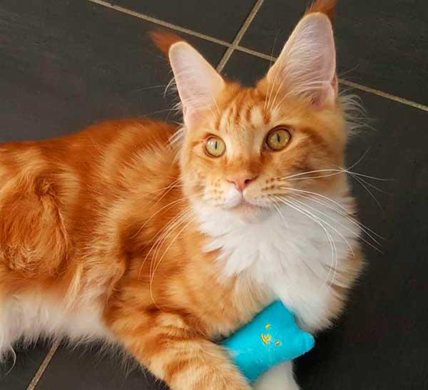 Secrets du ronronnement du chat