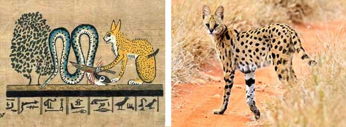 Comparaison entre le serval et la représentation d'un chat en Egypte antique