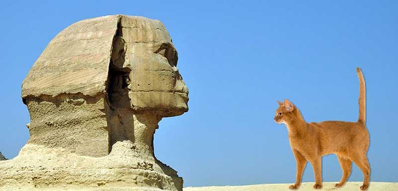 Le chat en Egypte antique, histoire et momifications