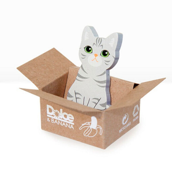 Cat in the box, American shorthair