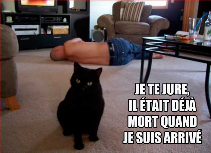 Connaissez-vous bien votre chat ?