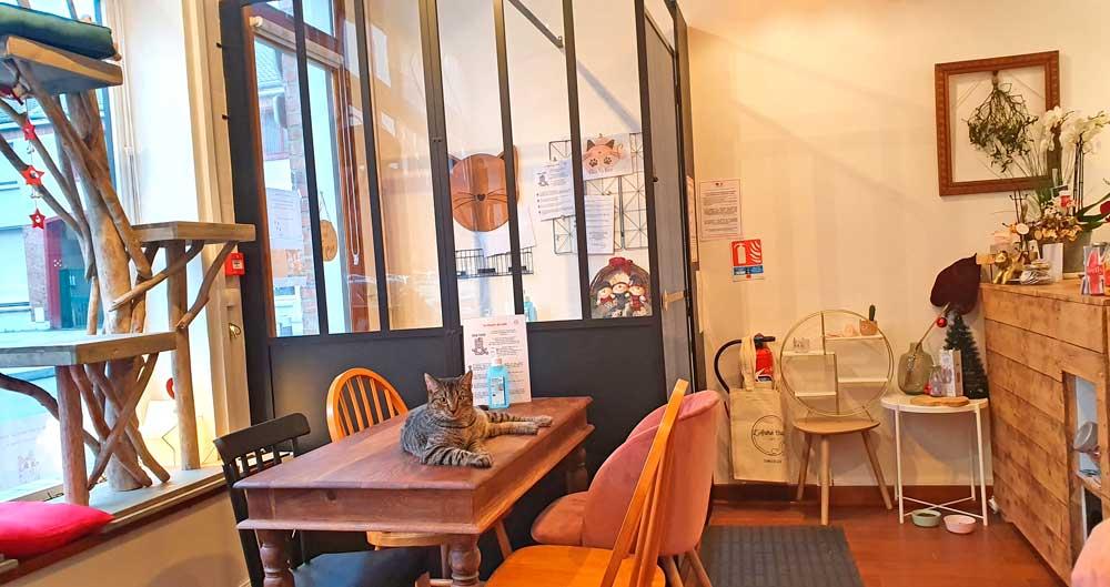 L'antre Chats, premier bar à chats à Dunkerque