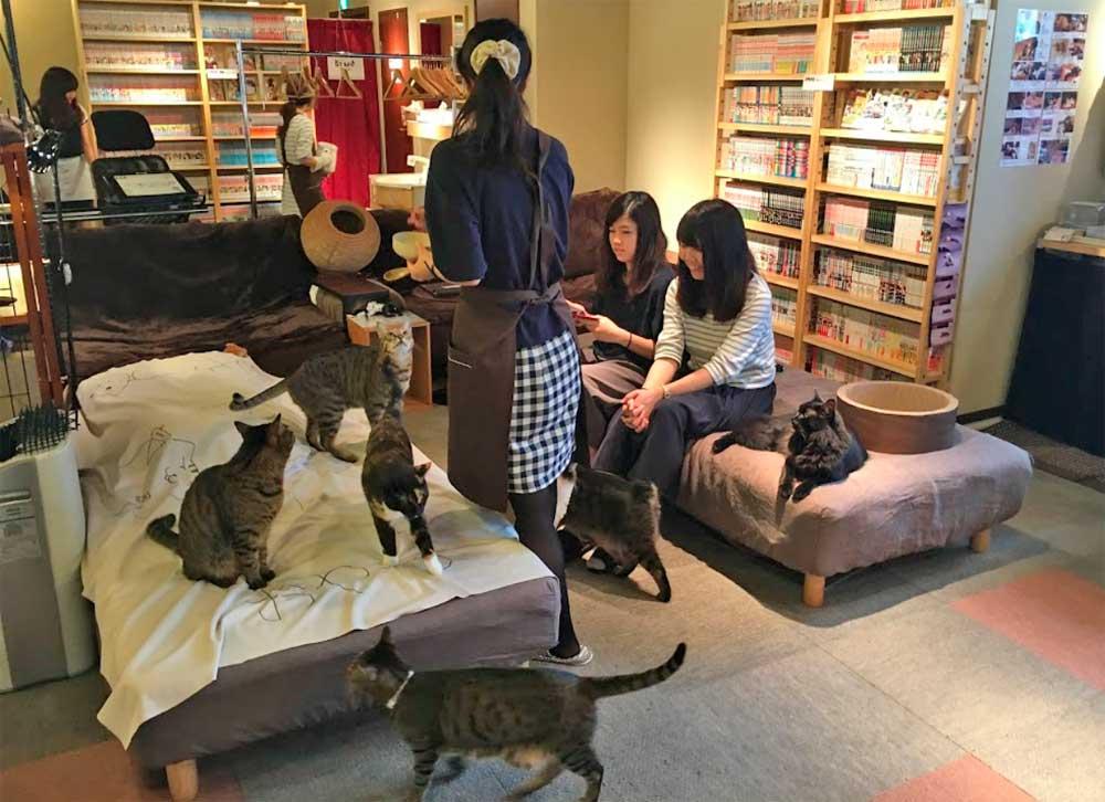 Bar à chats à Tokyo au Japon