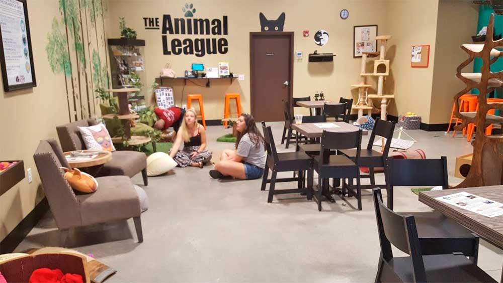 Cat Cafe de Orlando (USA)