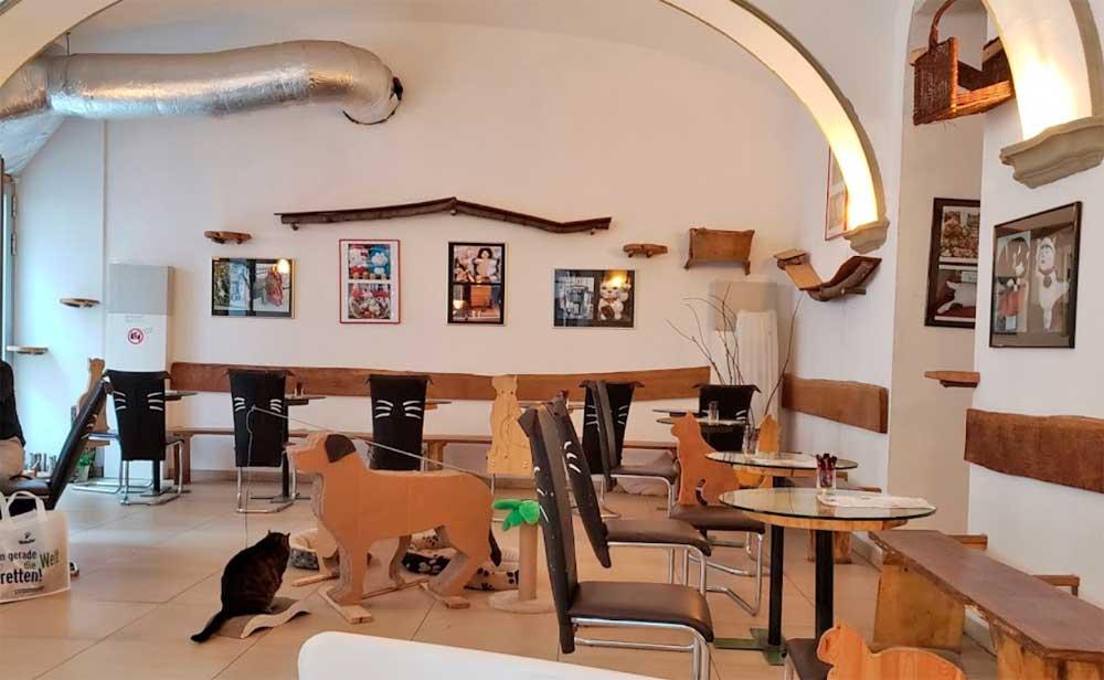 Bar à chats à Vienne en Autriche