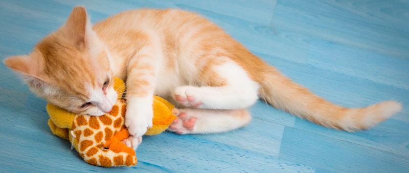 Jouets pour chaton