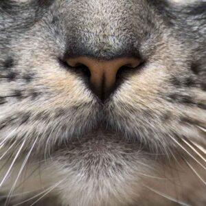 Masque en tissu Museau de chat
