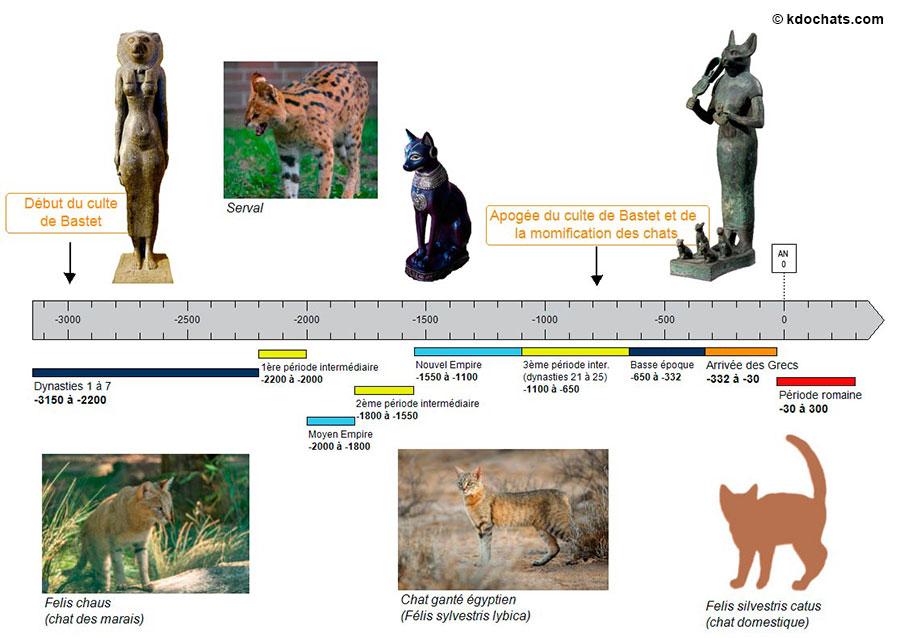 Frise chronologique de l'Egypte Antique montrant le rôle de la déesse Bastet
