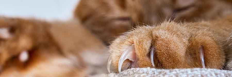 Arbre à chat et griffoirs pour chats