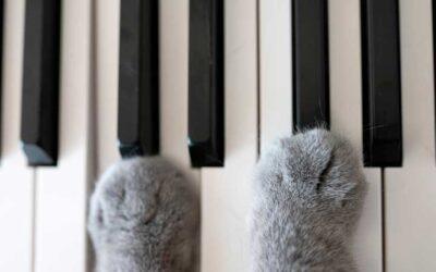 La musique et les chats, une histoire d'amour partagée