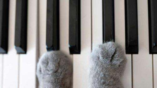 Les chats et la musique, l'harmonie parfaite