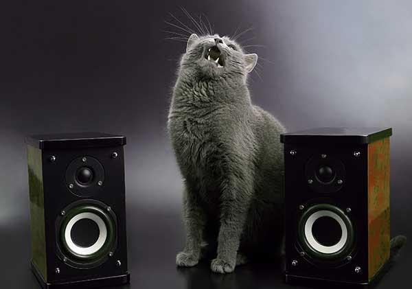 Les chats n'aiment pas la musique trop forte
