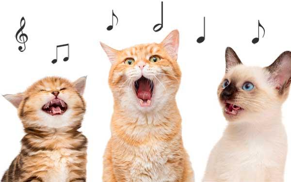 Chats et musique, les chats aiment-ils la musique ?