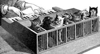 Orgue à chats