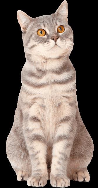 Kdo Chats, animalerie et cadeaux thème chat