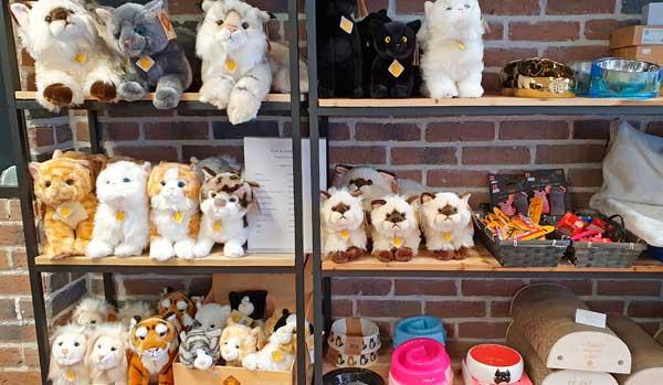 Peluches chat réalistes à l'animalerie de Dunkerque