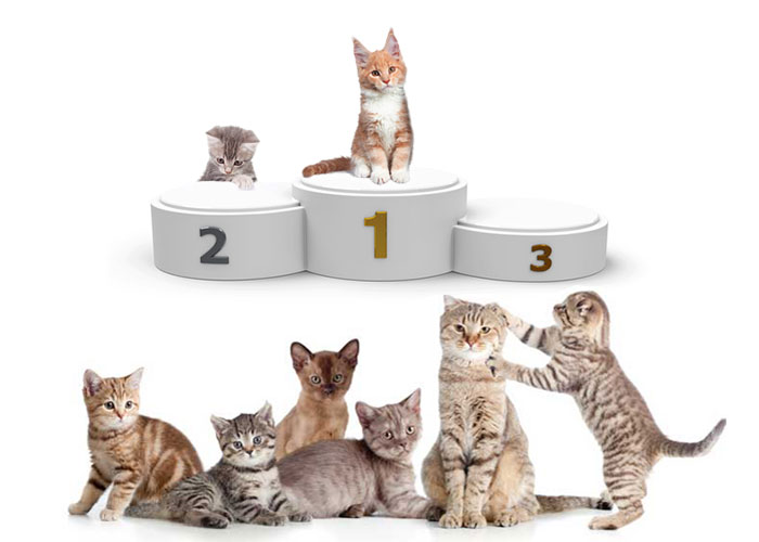 Les 10 races de chats préférées des français