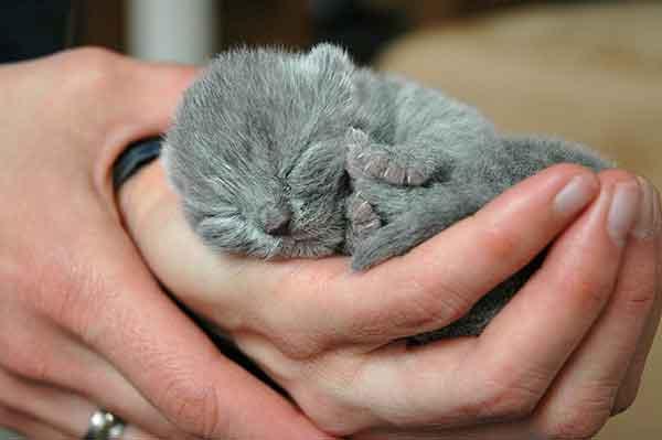 Chaton nouveau-né