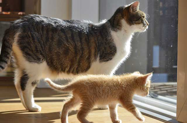 Cohabitation entre 2 chats
