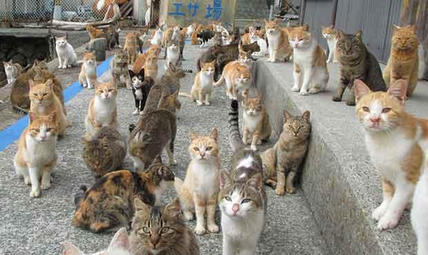 Groupe de chats cohabitant sur l'ile d'Aoshima au Japon