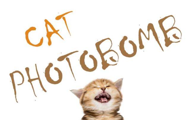 Photos drôles de chat : Les meilleurs photobombs de chat