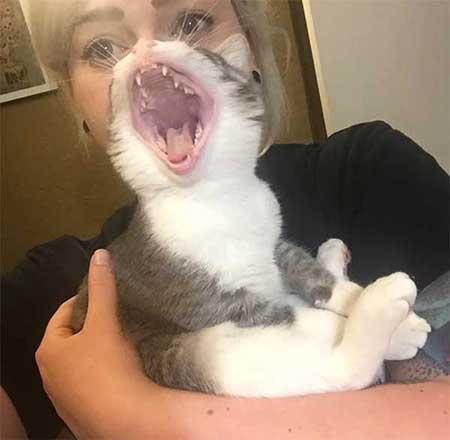 Photobomb d'un chat extra-terrestre