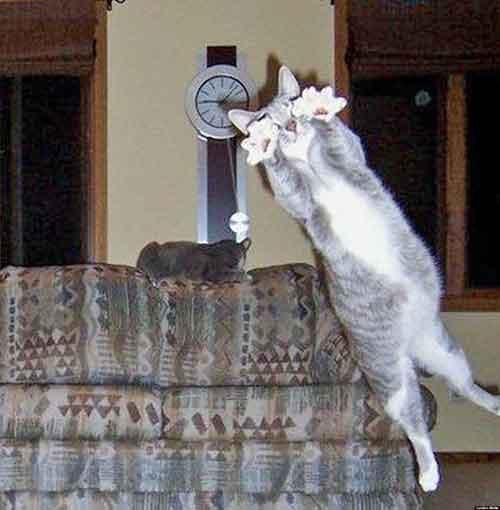 Photobomb de chat catastrophe