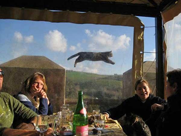 Photobomb d'un chat volant