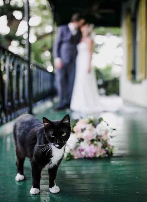 Photobomb de mariage avec un chat