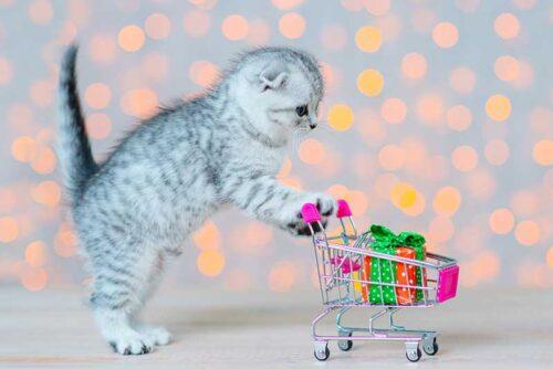 Quel jouet pour un chat qui s'ennuie ?
